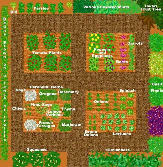 Sample kitchen garden plan in a 22' square foot space (each small square within is 4' x 6' space.)