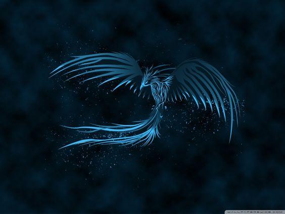 Download Blue Phoenix Hd Wallpaper Fond Ecran Oiseaux Photos