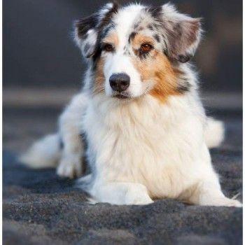 Pin Von Sylvia 64 Auf Schone Tiere 64 In 2020 Hunde Hunderassen Hunde Fotos