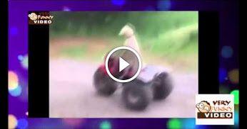 :)) this dog drive an ATV :))