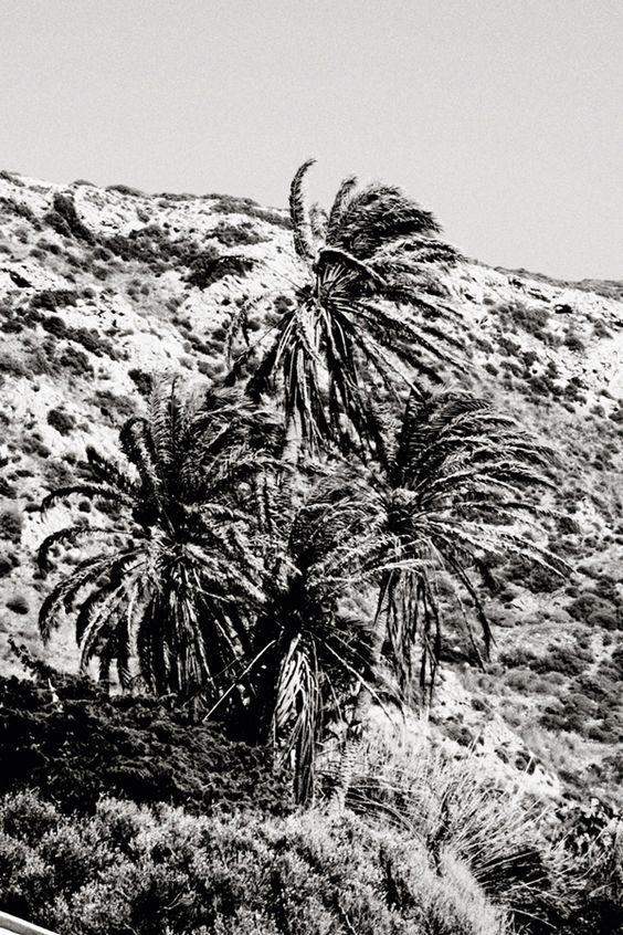 CristaSeya_LeVent_trees