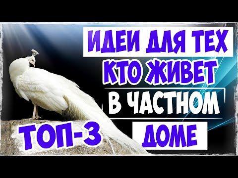 Top 3 Interesnye Idei Dlya Zarabotka V Derevni S Vygodnym Napravleniem Biznes Idei Idei Dlya Biznesa Youtube Biznes Idei Top