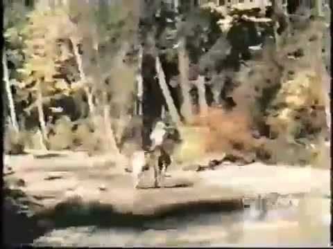 Bigfoot sightings discovery channel and the scientist on for Patterson woods