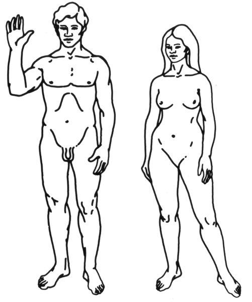 cuerpo hombre y mujer - Buscar con Google