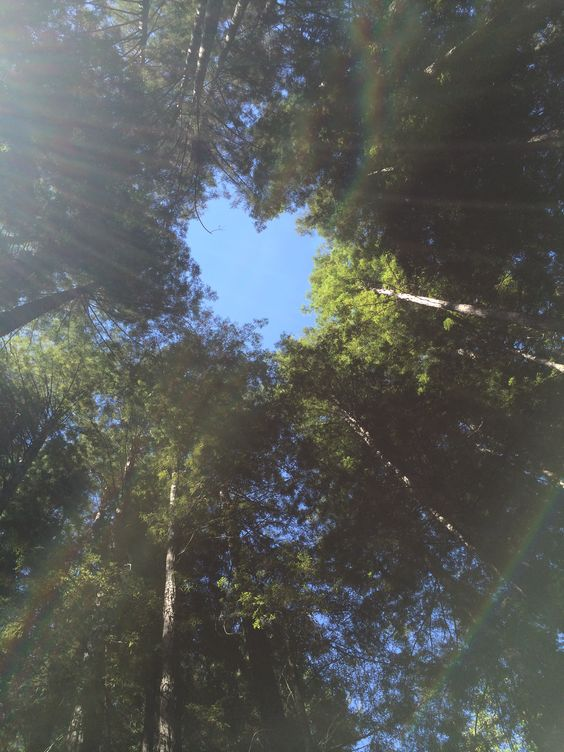 Sky Heart as seen when looking straight up from the Redwood Grove at Sequoia Retreat.