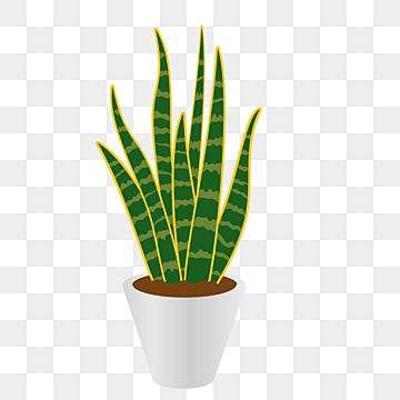 Sansieviera Plant On The Pot Plant Clipart Tropical Leafs Png And Vector With Transparent Background For Free Download Plants Painted Plant Pots Plant Cartoon