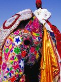 Entrant in Best Dressed Elephant Competition at Annual Elephant Festival  Jaipur  India