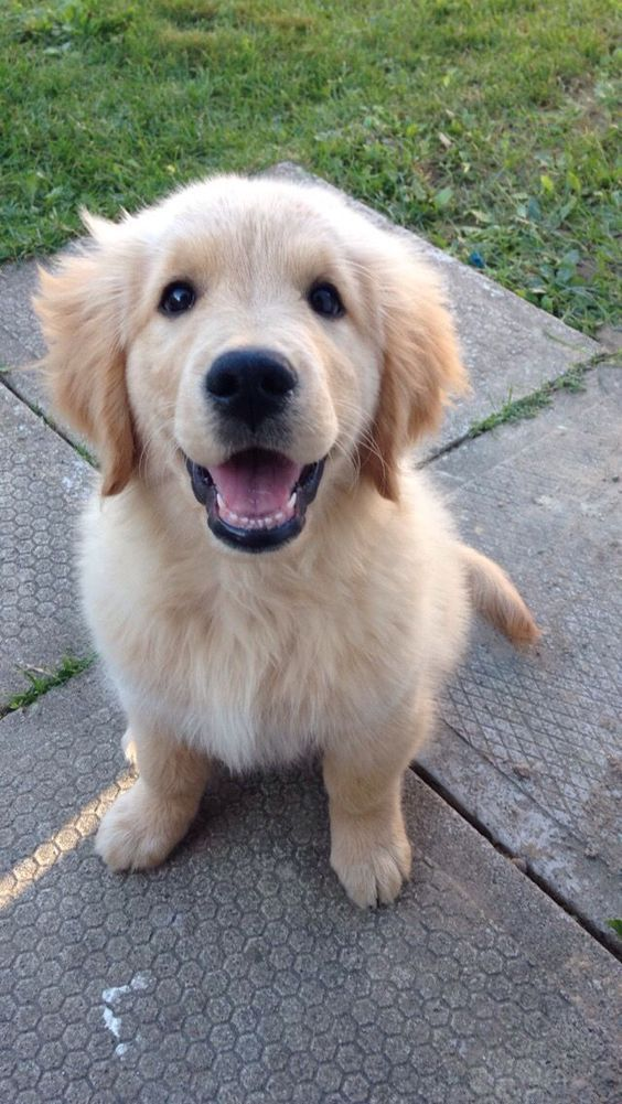 Because It S Cute Aww Cute Animals Cats Dogs Dogs Golden