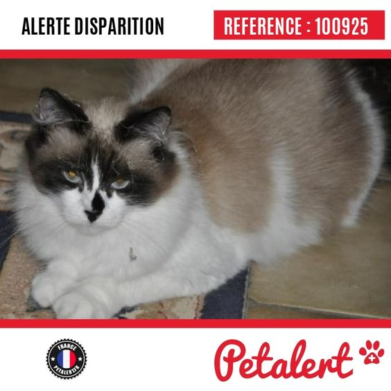 https://www.petalert.fr/alerte-disparition/100925/