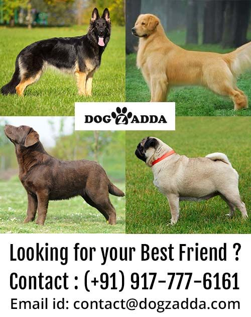 Looking For Your Best Friend Contact Us 9177776161 Visit Our Site