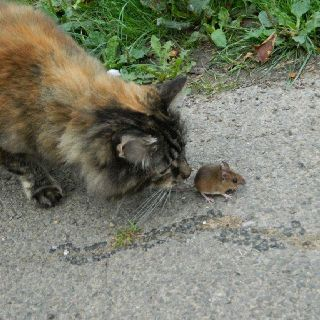 Pebbles and a friend,she didn't hurt it just watched it. Pebbles is our fluffy tabby walking and fluffy tabby face.