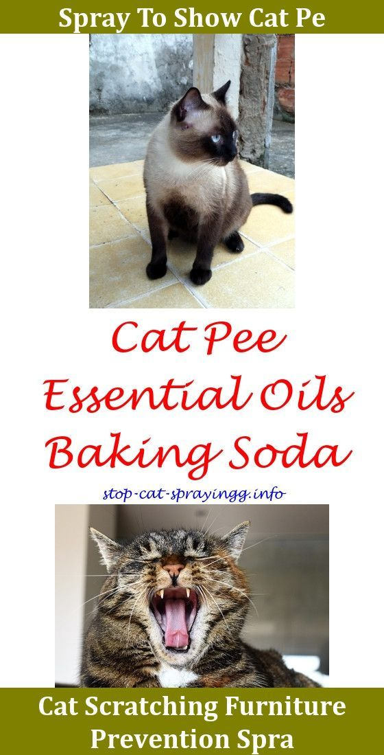 Cat Spraying Urine Problems