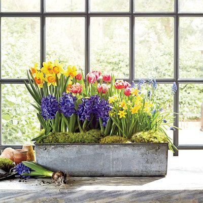 Indoor Container Gardening Ideas Gardens Garden ideas and Home