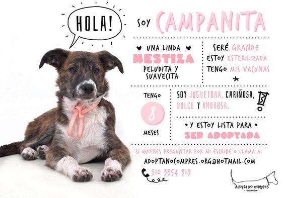 Fundación Adopta No Compres on Behance