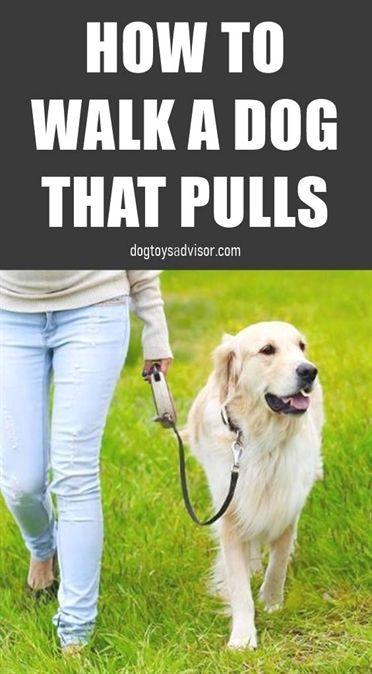 Dog Training Collar Dog Training Quincy Ma Dog Training 90266