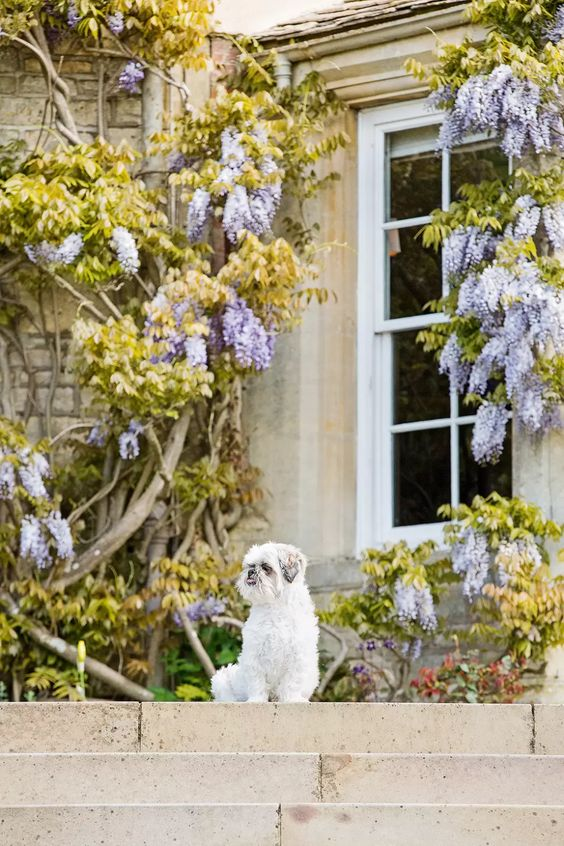 Dixton Manor: Inside the Hambro family home | Tatler