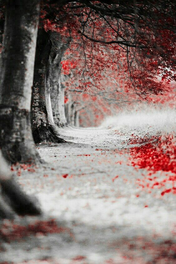 Pin By Nadine German On Paint With All The Colors Color Splash Photo Color Splash Photography Red Images