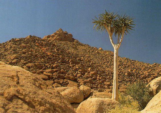 https://flic.kr/p/aMgozv | South Africa, Richtersveld Cultural and Botanical Landscape