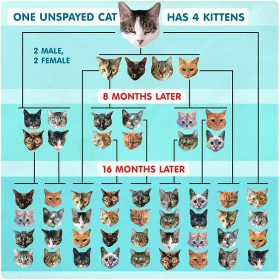 SPAY AND NEUTER!! IT SAVES LIVES!!
