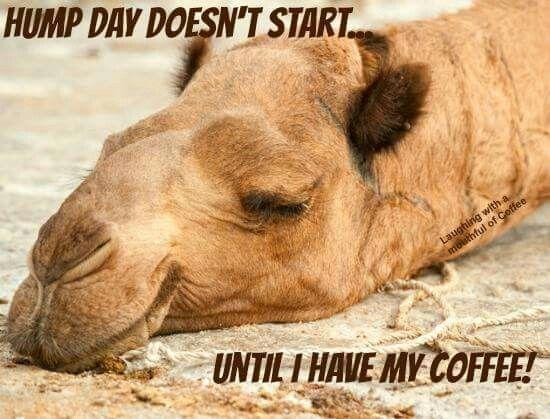 Humpday Happywednesday Wednesday Coffee Wednesday Humor Funny Hump Day Memes