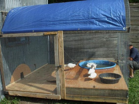 Duck aviary pen i like the raised pool next to the edge for Duck hutch ideas