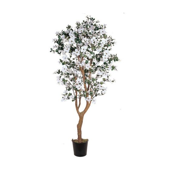 Dogwood Silk Tree - 5 Feet Tall * Want to know more, click on the image.