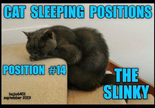 cat sleeping positions meme  aline art