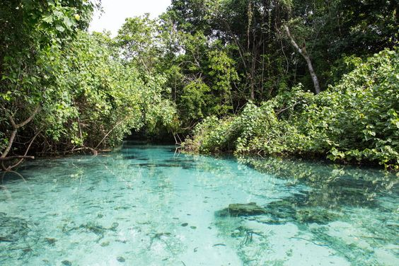 Nanda Blue Hole au Vanuatu - Les plus belles piscines naturelles du monde