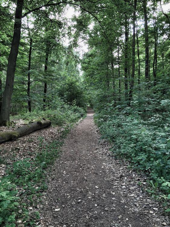 Ein Waldweg an Weinberg