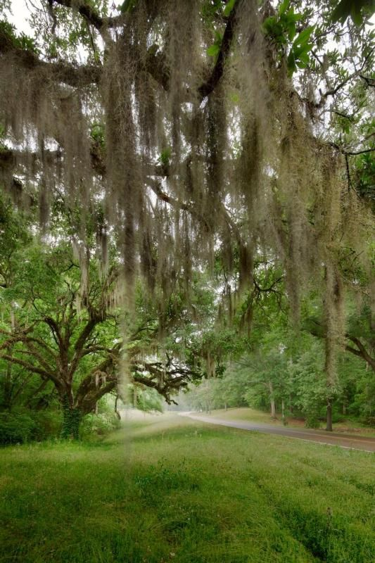 natchez chat sites Welcome to the elitefitnesscom bodybuilding site please join this discussion about natchez trace within the chat & conversation category excerpt.