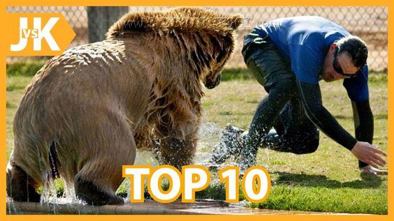 Top 10 Animal Attacks on Humans || Most Amazing Wild Animal Attacks 2016
