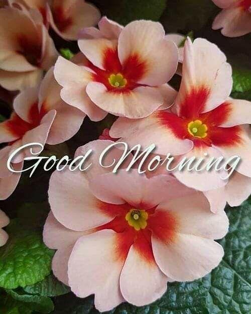 Pin By Jasvinder Kaur On 1 Good Morning Good Morning Flowers Good Morning Flowers Rose Morning Flowers