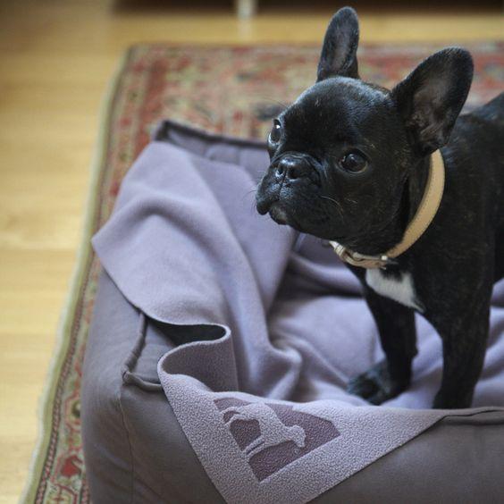 MiaCara dog blanket COPERTA mauve/anthracite