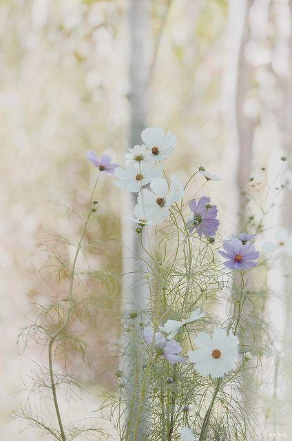flower blossoms / soft and subtle images: