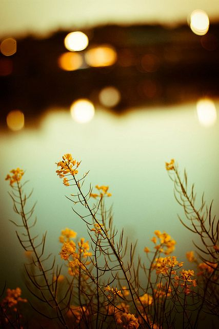 Spectacular Examples of Bokeh Photography: