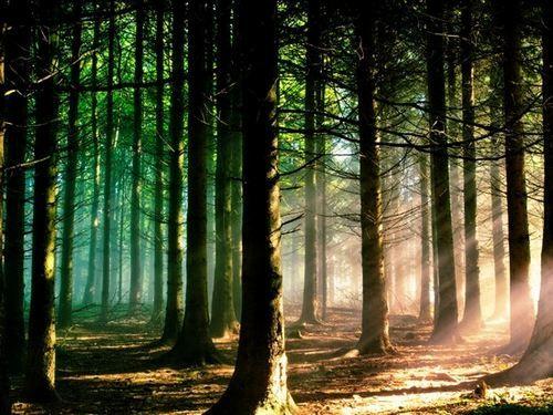 25 Beautiful Nature Hd Wallpapers Macbook Pro Wallpaper Forest Wallpaper Beautiful Nature