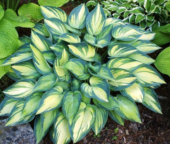 """The Healing Garden"" by David Squire says put white plants at the bottom of stairs ""to make their position clear in the falling light of evening"" ...June Hosta"