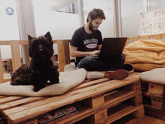Olha só quem veio trabalhar com a gente hoje!! O Billy ❤️ #achadosnaplug #PLUGBKLN #dog
