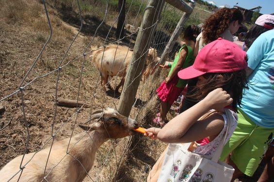 Em ZMar, hora do almoço dos animais