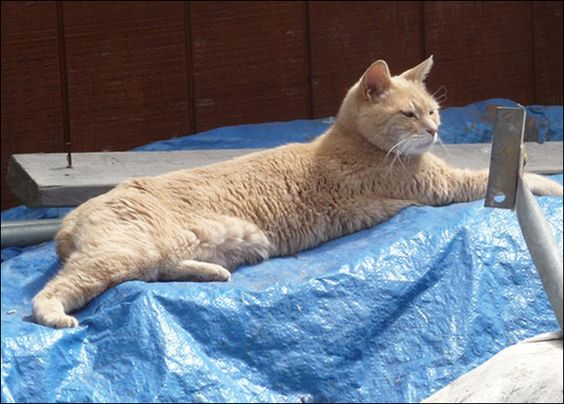 Stubbs the cat is the mayor of Talkeetna, Alaska, having won the post as a write-in candidate.