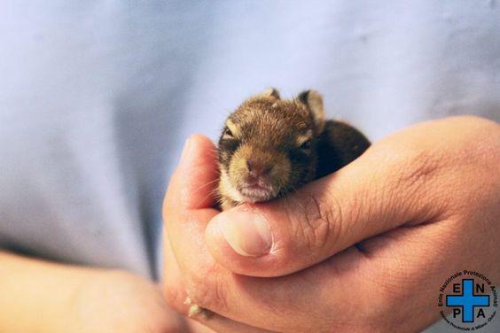 Questa volta a salvare un leprotto di pochi giorni è stata una ragazzina di 12…