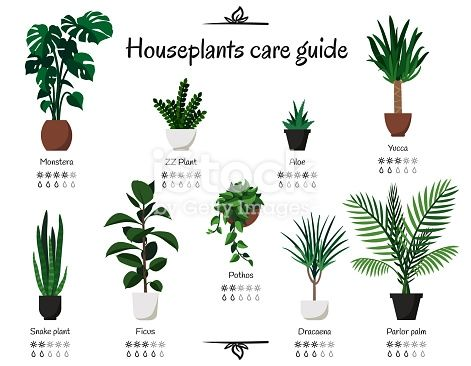 Download This Popular Common Houseplants Care Guide Vector Isolated Collection Of Various Indoor Ornamental Plants With Wat House Plant Care Plants Plant Pests