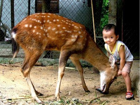 nhung hươu đối với trẻ em