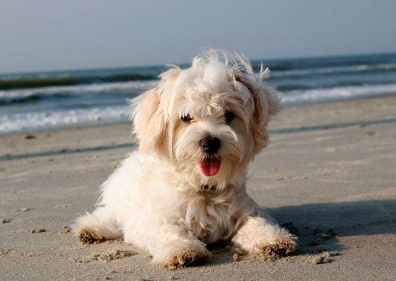 Beach pup