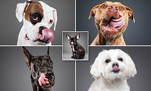 They've got it licked! Incredible photo project shows man's best friends cleaning up in the way nature intended  | Daily Mail Online