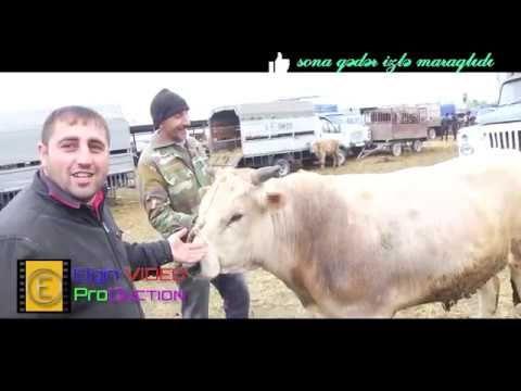 Berde Mal Qoyun Bazari 2019 Youtube Animals Youtube Cow