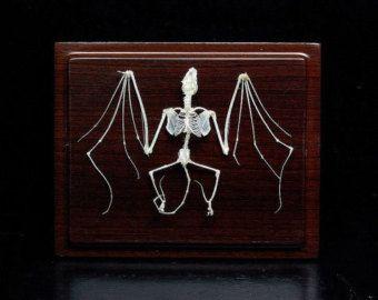 Echte Fledermaus Skelett mit Koffer und Base, Weihnachtsgeschenk