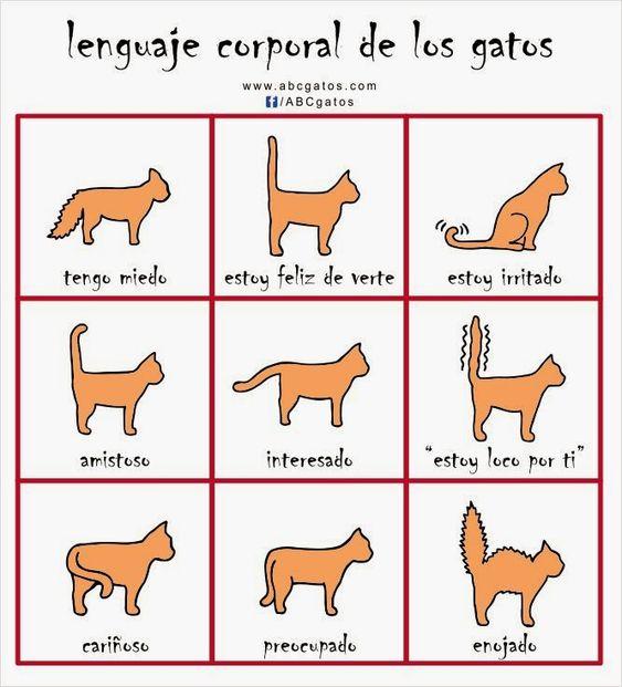 Infografía sobre el lenguaje corporal de los gatos