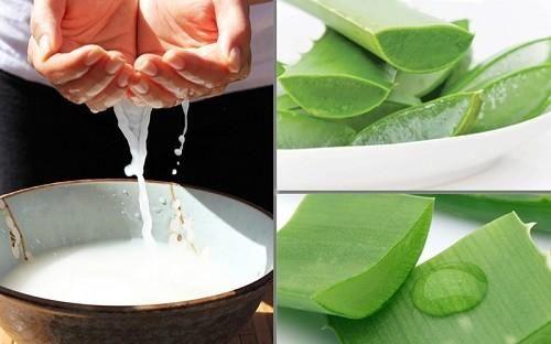Nha đam và nước vo gạo cũng là một trong những sự kết hợp hoàn hảo giúp dưỡng tóc đẹp tự nhiên.