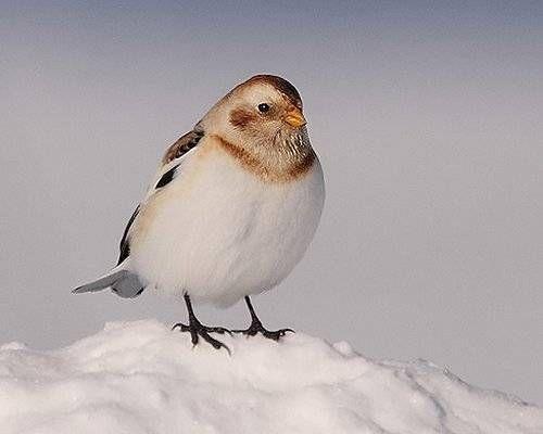 Empavesado de nieve